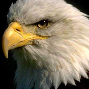 Eagle-zy